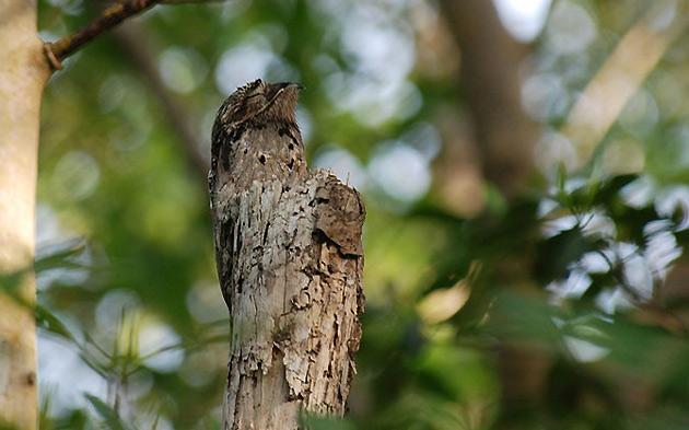 Birdwatching in Venezuela Occidentale con Ornitour